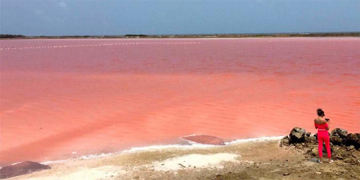 Mar rosa Galerazmba